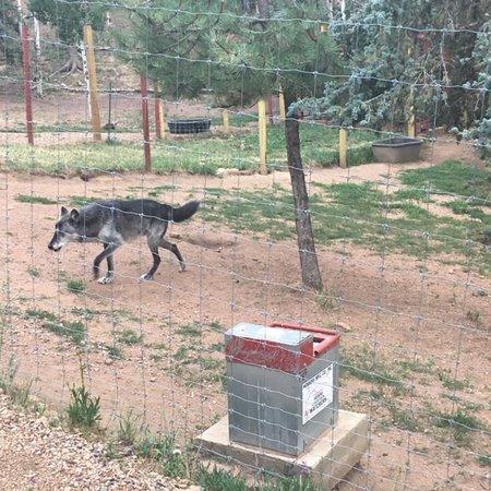Colorado Wolf and Wildlife Center張圖片
