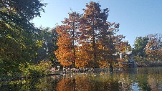 حديقة لويس بارك بـ مانهايم: 20171015_144443_large.jpg