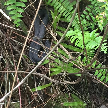 Corkscrew Swamp Sanctuary: photo1.jpg
