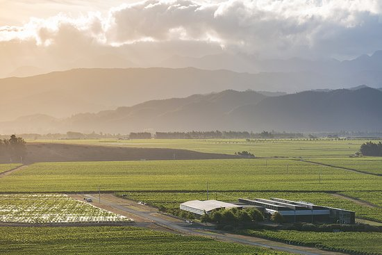 Blenheim, Nueva Zelanda: Our whole operation is under one roof in the middle of our vines
