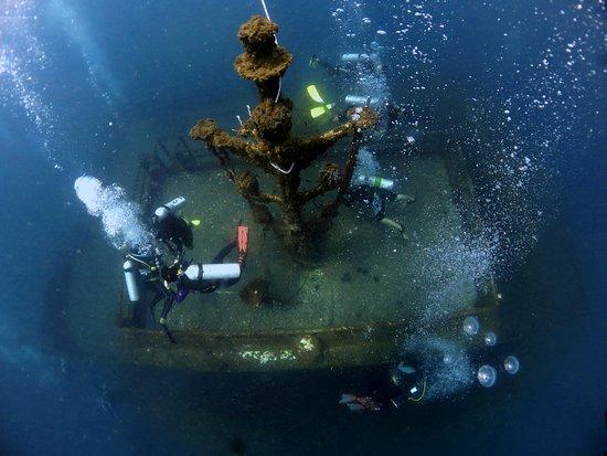 Poni Divers