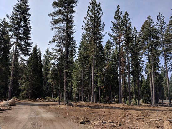 Foresthill, CA: View of the driveway from the lodge
