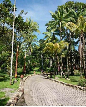 Integrasi Hotel ke dalam Rimba - Ulasan Rimba Papua Hotel