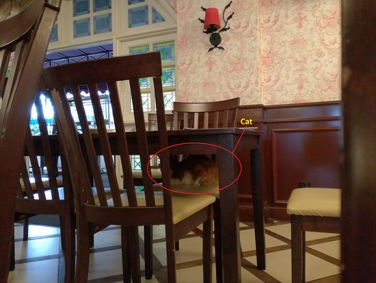 Bukit Tinggi, Malesia: Cat roaming and resting in outlets