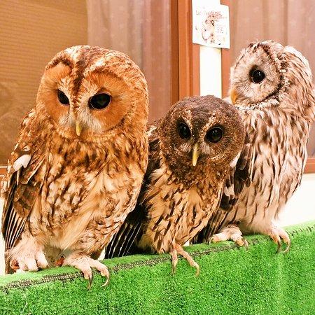 Owl Village Shibuya