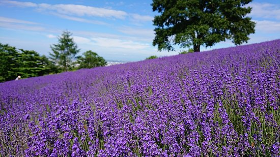 Horomitoge Lavender Garden