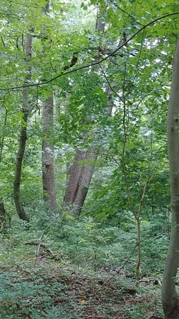 Saddler's Woods Conservation Association