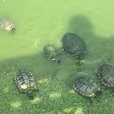 Adventure Tours in Motion: We had an amazing time touring Tybee Island and feeding the turtles with our big family. Perfect