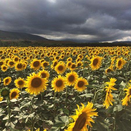 Ibero, Spain: Naturalmente Navarra... le recibe con todo el repertorio de luz y color.. que lo disfruten!!!