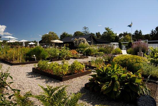Krysmyntagården: Mysig trädgård