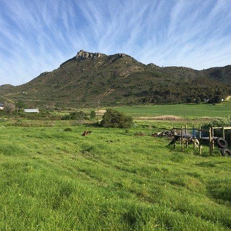 Fynbos Estate: photo1.jpg