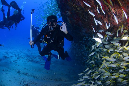 Caye Caulker, Belize: Blue Hole Diving at Belize Diving Services