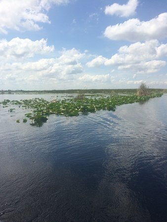 Everglades Adventure Tours: Everglades
