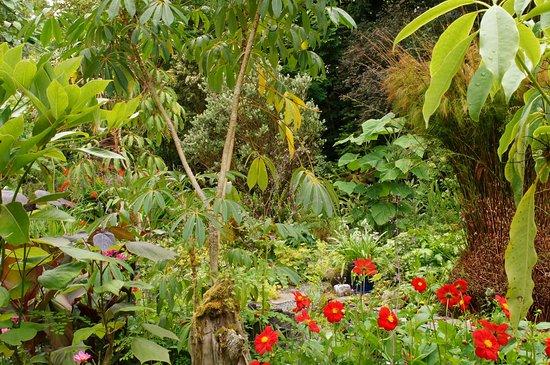 General Garden View Good Schefflera And Tetrapanax More