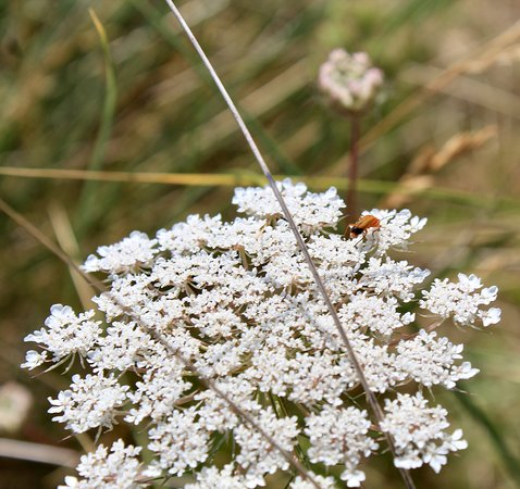 Morfa Bychan, UK: Flaura and Fauna in the dunes