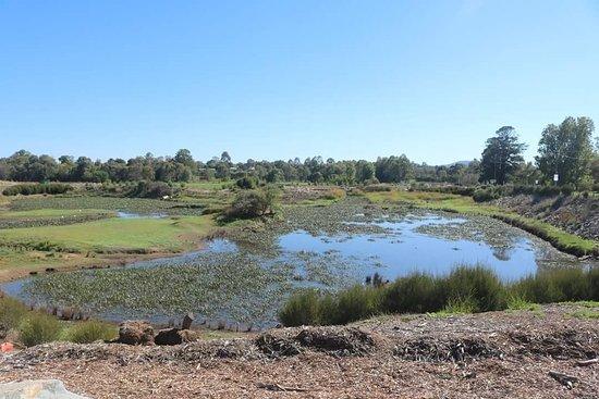 Goulburn Wetlands