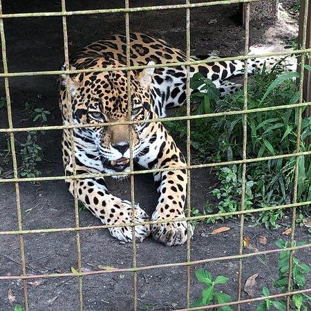 Big Cat Rescue Tour Review