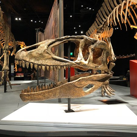 Perot Museum of Nature and Science: photo4.jpg