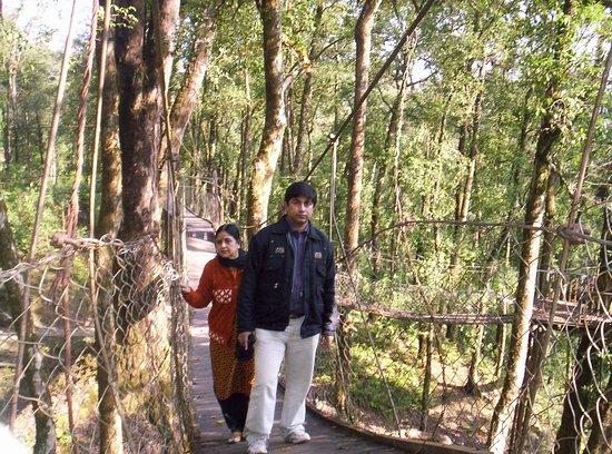 Canopy Walk照片