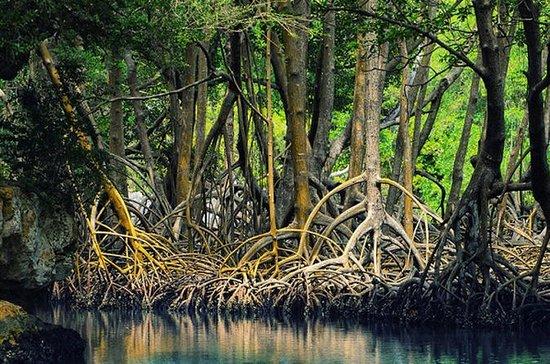 Safari en bateau de l'estuaire de...