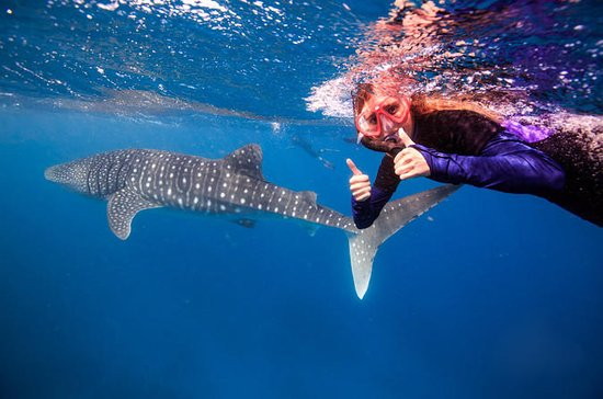 Swim with Whale Sharks or Humpback...
