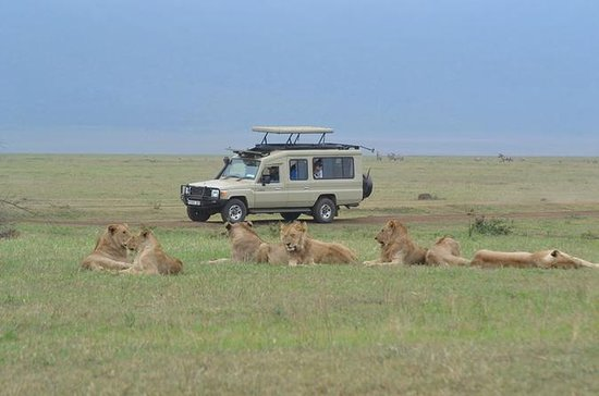 5 jours - Tanzanie Camping Safari