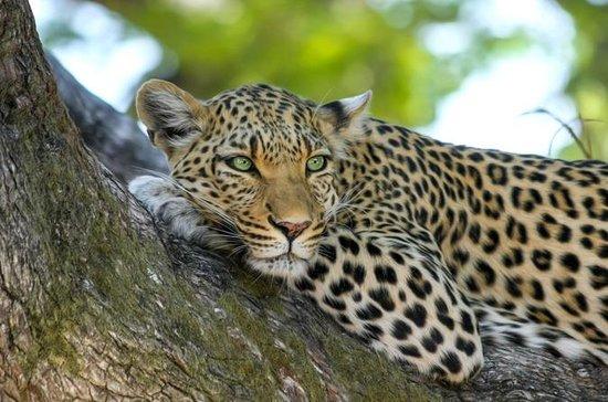 Safari & Spa Combo: Aquila Safari...