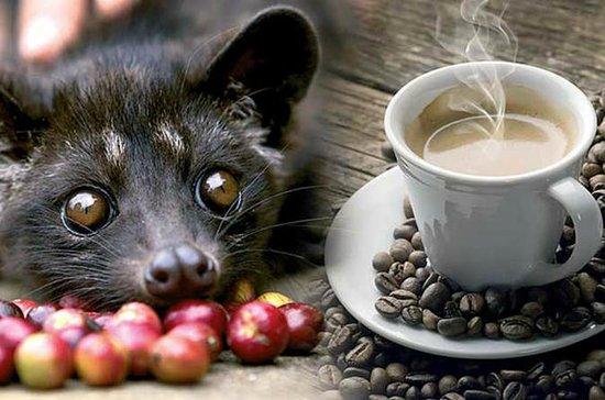 Best Of Bali Luwak Coffee Plantation...