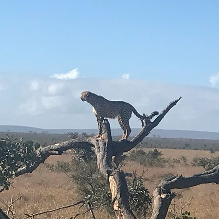 Crowned Eagle Tours and Safaris: photo0.jpg