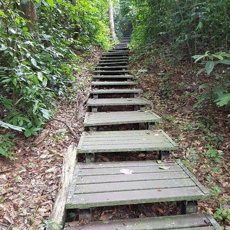 Taman Negara National Park, Malaysia: IMG_20180723_121806_022_large.jpg