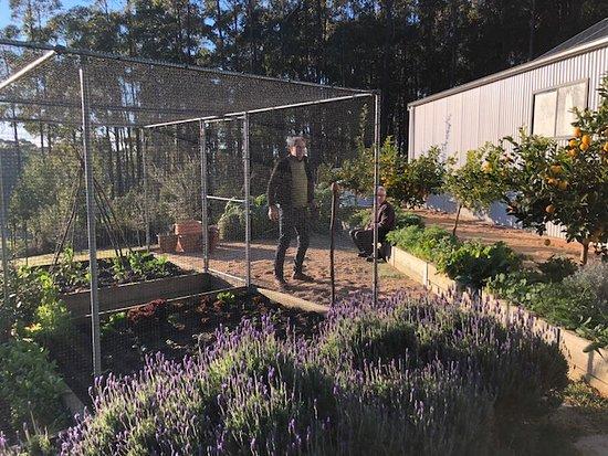 Jindivick, Australia: My husband enjoying the produce area