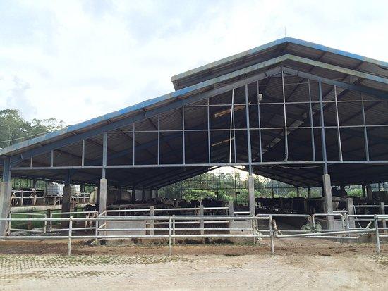 Gundaling Farmstead Berastagi: Farm