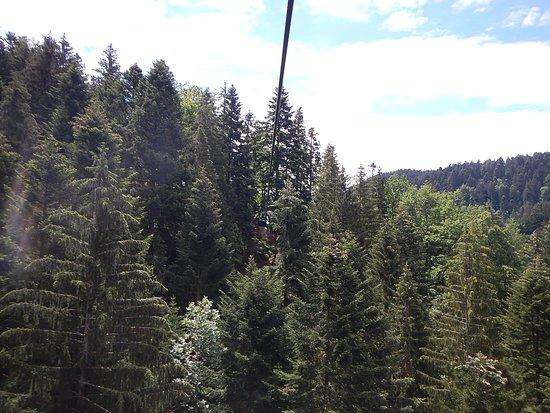 Hirschgrund - Zipline Area Schwarzwald: Above the tree lines within the Black Forest