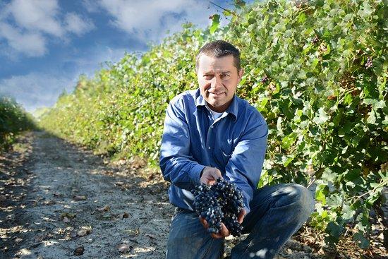 Arles, France: Didier Cornille dans les vignes