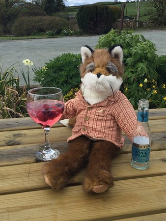 Uldale, UK: Mr Snooty Fox enjoying a cold G&T in our wonderful Gardens