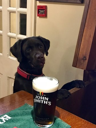 Uldale, UK: Dogs (well behaved) of all shapes and sizes are welcome in our Village Bar, where you can relax.