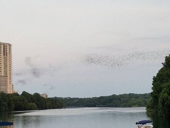 Capital Cruises: The bats resemble swirls of smoke in the distance