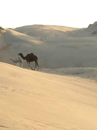 belle rencontre dans les dunes...