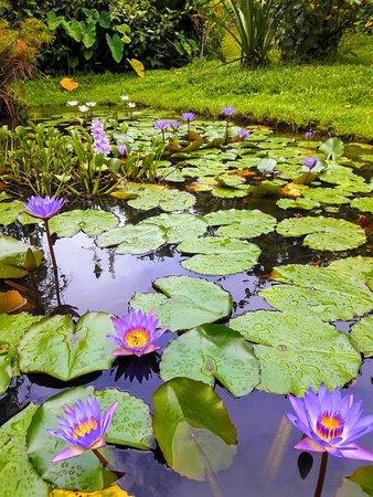 Isla San Cristobal, Panama: El jardin