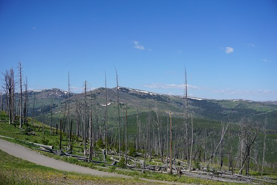 Evidence of fire on the road up Mount Washburn