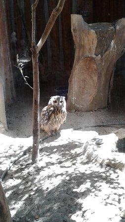 Limassol Zoo: Сова