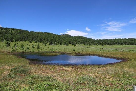 池の平湿原