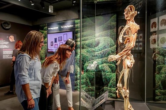 Body Worlds Amsterdam 'The Happiness...