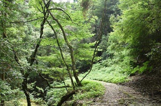 Wandern Abenteuer in Mt. Kasuga Urwald