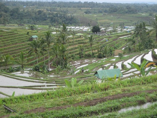 Sonrisa Viajes: Terrazas arroz Jatilluwih