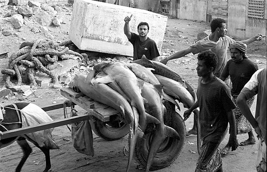 Al Hudaydah, เยเมน: In Hudaydah, it is almost an obligation to visit the fish market in the harbor. Fascinating spec