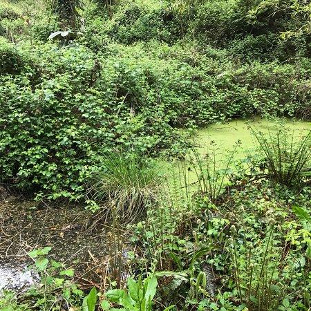 Jungle Garden Karlostachys: photo1.jpg