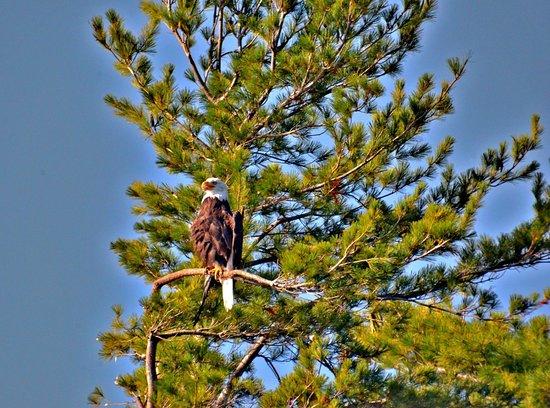 Best Western Saranac Lake: Birdwatching Paradise
