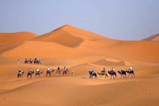 Región de Rabat-Salé-Zemur-Zaer, Marruecos: camels in the desert