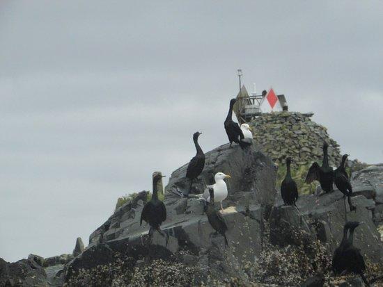 Sitka, AK: More birds